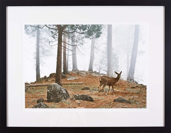 Yosemite Deer   Guilford Exhibit Photography Art | Peter Wnek Photography
