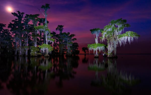 Moon over Maurepas swamp photography