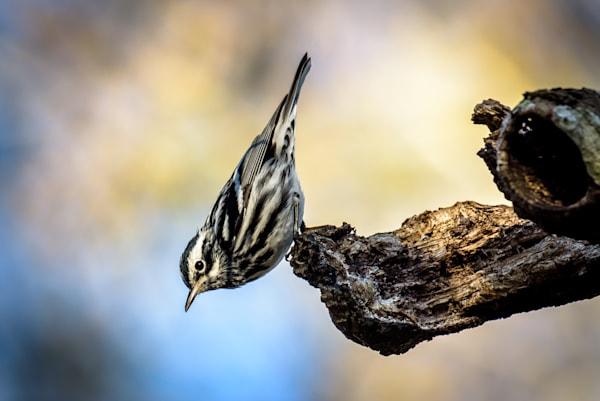 Bird, warbler, song bird,