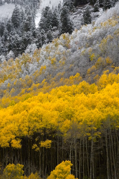 Colorado Fall Colors Nature Photography Prints | Robbie George