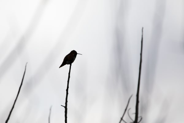 Hummingbird Silhouette Photography Art | Leiken Photography