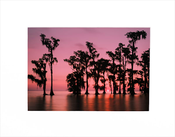 Lake Maurepas swamp sunrise matted print