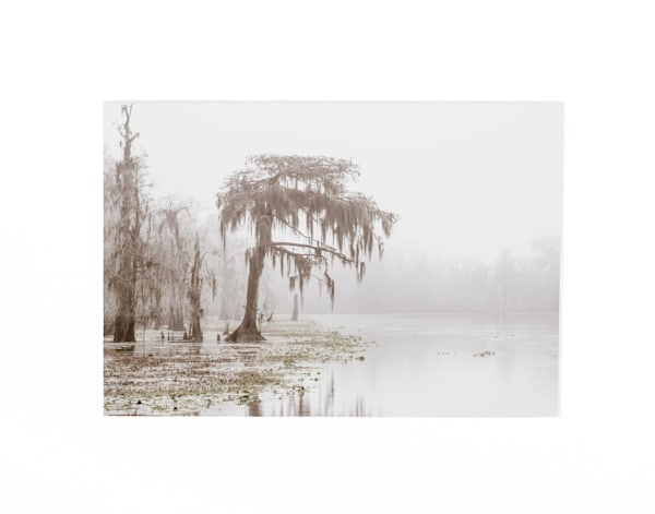 Foggy cypress tree swamp 5x7 print