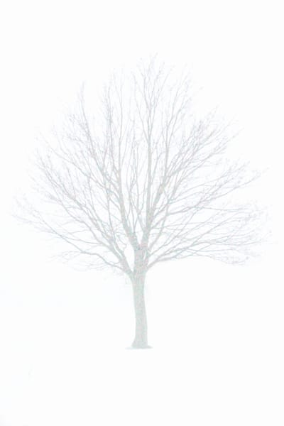 A lone tree in the mist with spots and color with a stark background