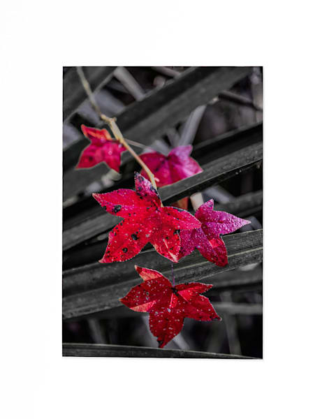 Leaf on palmetto swamp photography print