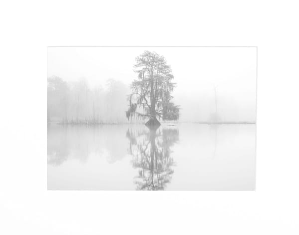 Swamp ghosts photography print