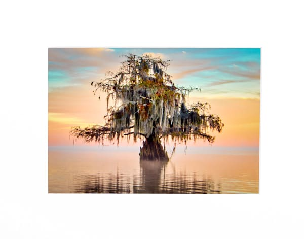 Pastel swamp sunrise photography