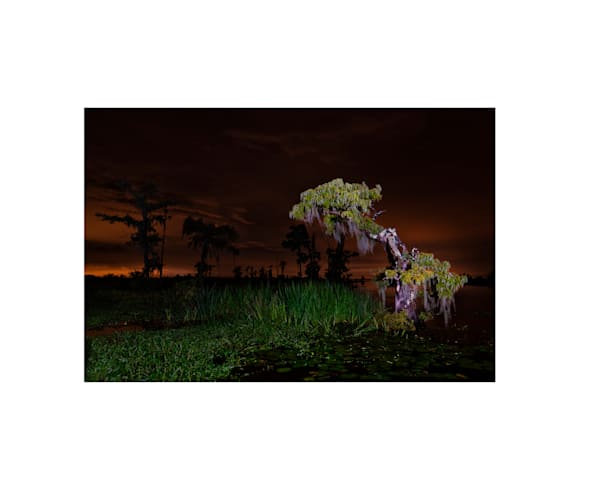 Nighttime in Manchac Swamp photography