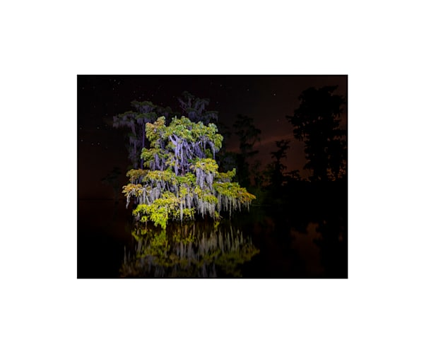 Cypress Swamp at Night photography