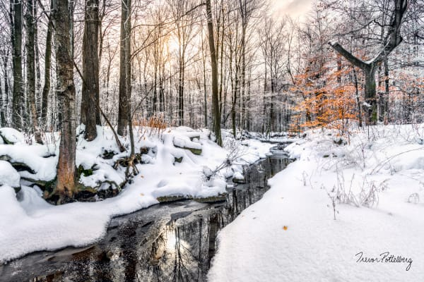 Winter In The Woodland Photography Art | Trevor Pottelberg Photography