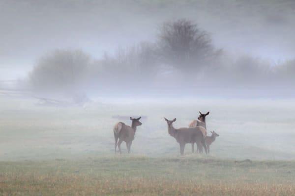 Elk Wildlife Prints | Robbie George