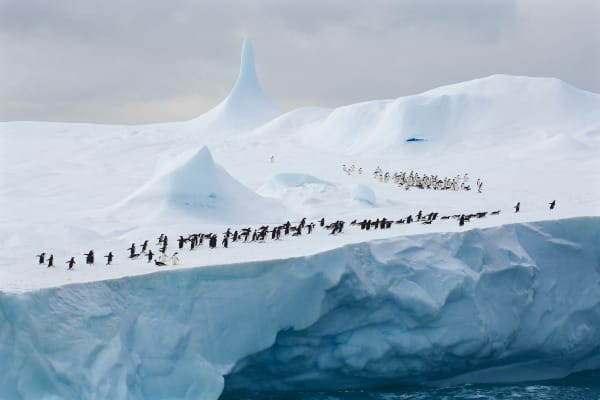 Adelie Penguins on an iceberg in the Weddell Sea with a pinnacle formation.