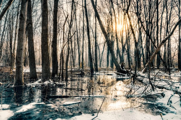 The Woodland Photography Art | Trevor Pottelberg Photography