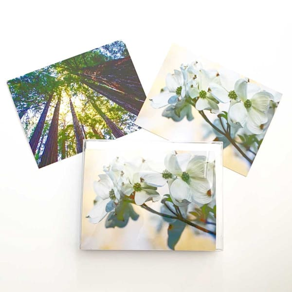 Dogwoods and Redwoods Notecards
