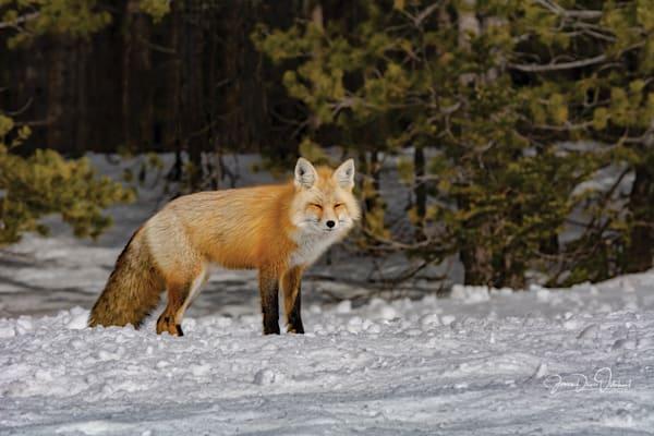 FOX 6138