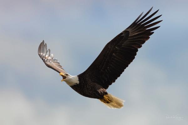 Call of the Eagle Fine Art Photo