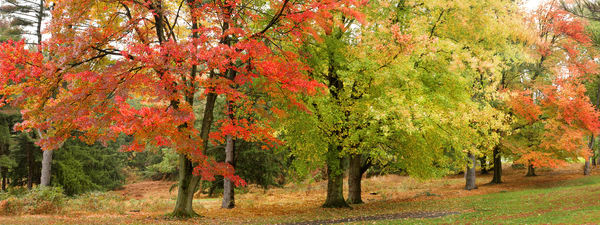 Lancaster Fall Trees | Luscious Landscape Photography - Art By Smiths