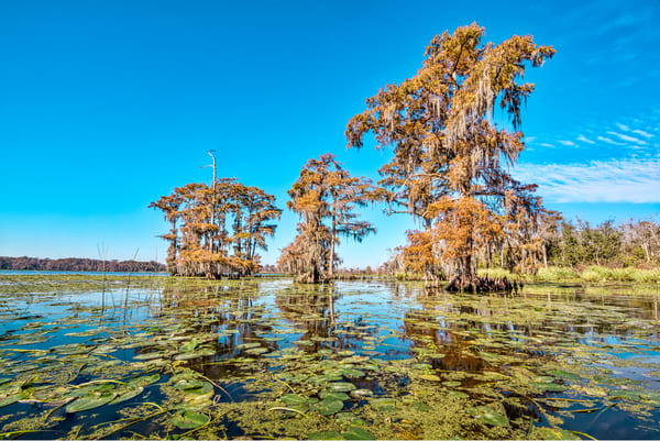 Louisiana fall swamp photography