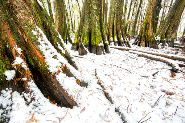 Louisiana snowfall swamp photography