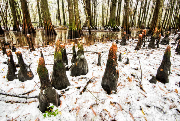 Snow in the swamps photography