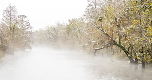 Snowy bayou swamp photography