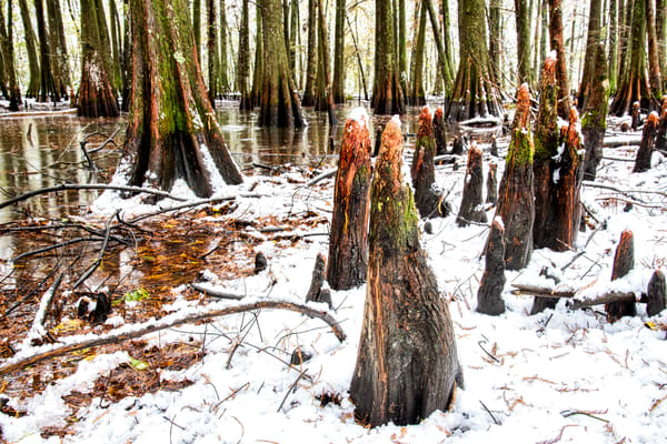 Swamp in white photography