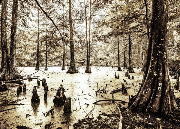 Swamp in Sepia photography pritns