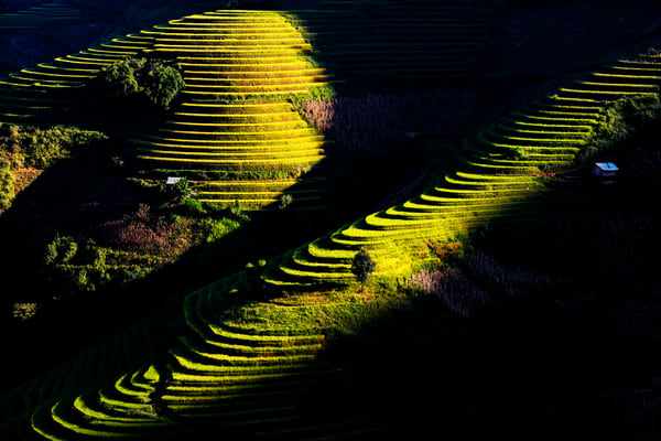Morning sun at stepped rice fields in Yen Bai