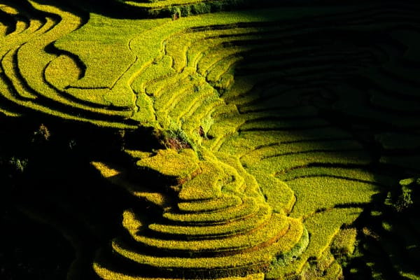 Stepped Rice Fields in Yen Bai Sun rise