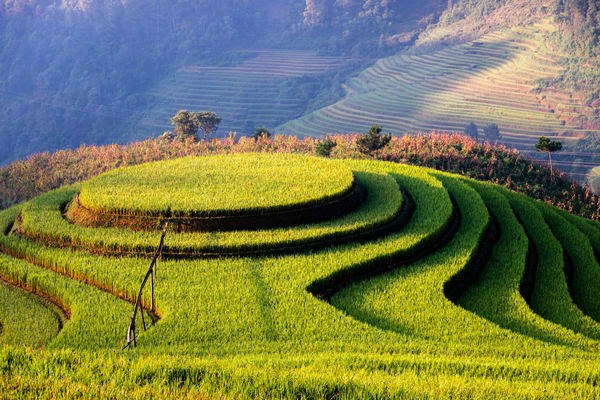 Morning Mam Xoi at Mu Cang Chai
