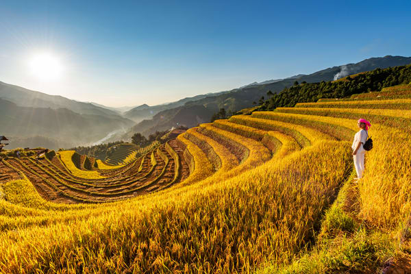 Fully Harvested Terraced Rice Fields in Sang Nhu Mu Cang Chai