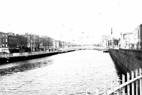Dublin River Liffey Seagulls BW DSC_4148.jpg