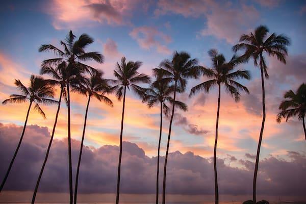 """Sunrise Palms"""