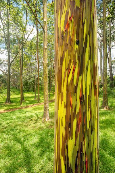 """""""Rainbow Trees"""""""