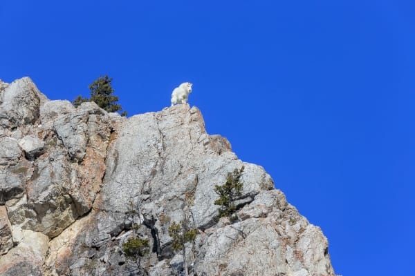 Mountain Goat Pictures | Robbie George Photography