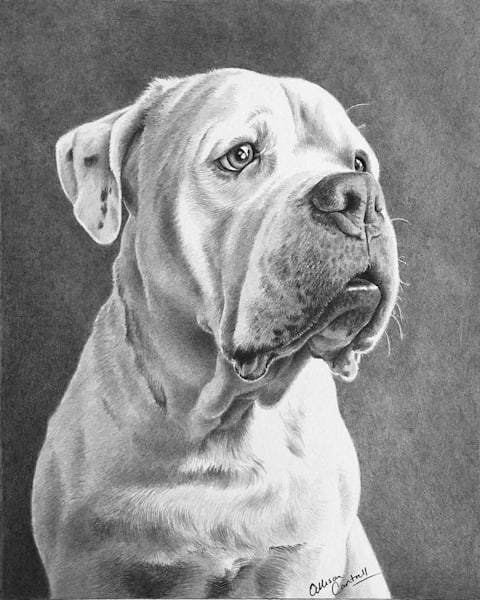custom pencil pet portraits