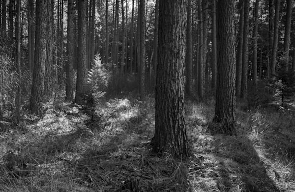 Shadow Play   Cloquet National Forest Northern Minnesota Photography Art | Namaste Photography