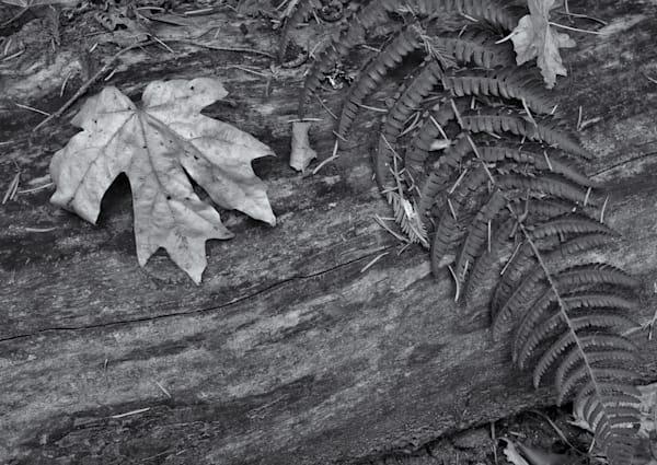 Still Life   Minnesota Photography Art | Namaste Photography