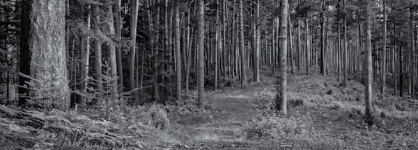 Forest Glade - Northern Minnesota