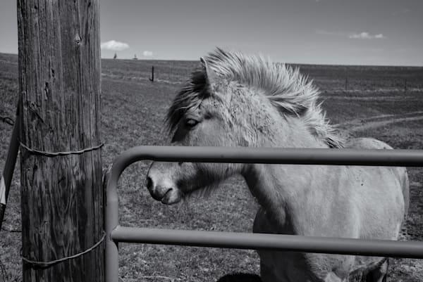 Horse   Minnesota Photography Art   Namaste Photography