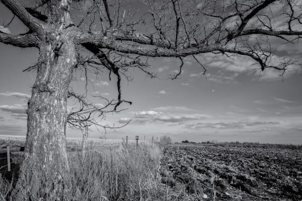 Oak Tree & Field   Minnesota Photography Art   Namaste Photography
