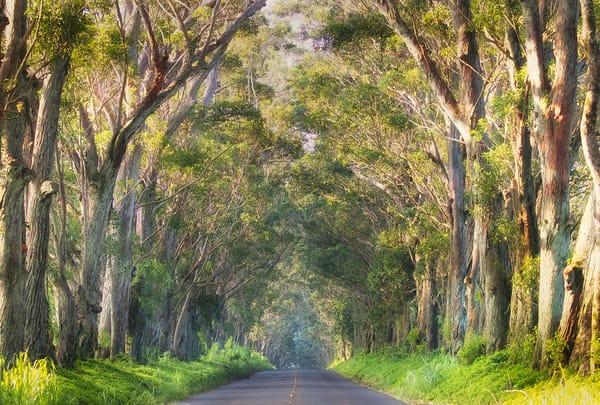"""""""Road to Koloa"""""""