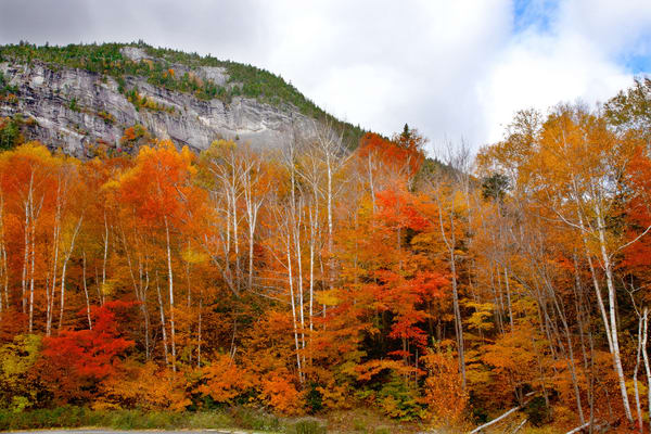 The Majestic Mountains of White Birch Trees | Luscious Landscape Photography - Art By Smiths