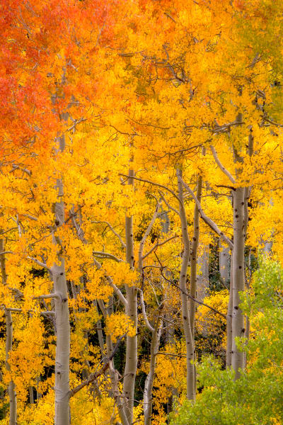 Fall Scenery Forest Wall Art Prints | Robbie George