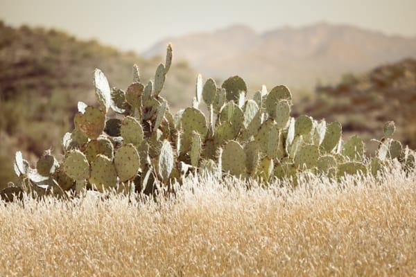 Prickly Pear Cactus Fine Art Print