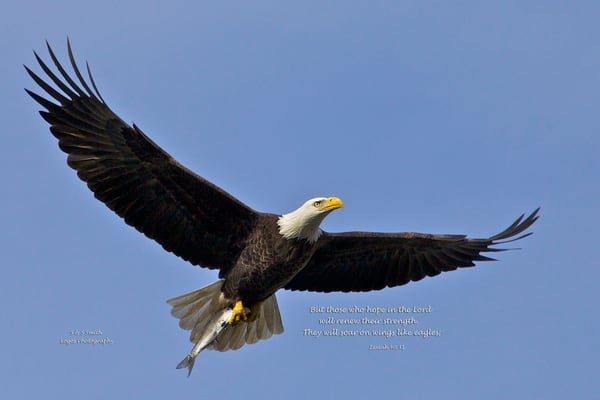 When Bald Eagles Go Fishing | Art By Smiths - Wildlife Photography