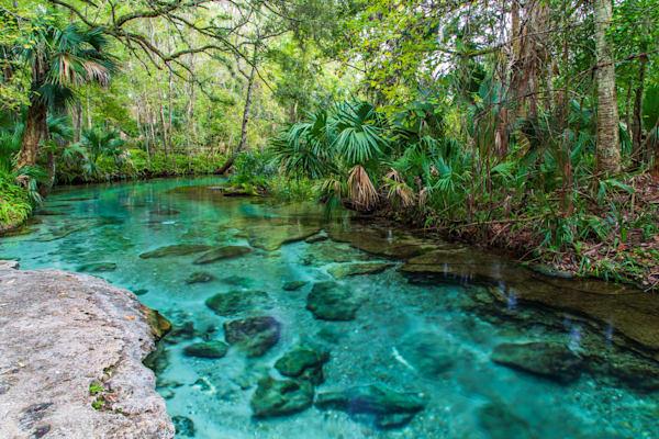 Florida Landscapes Color