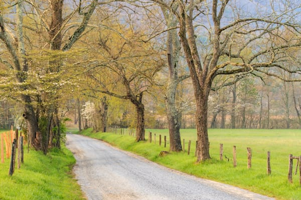 Southeast Landscapes