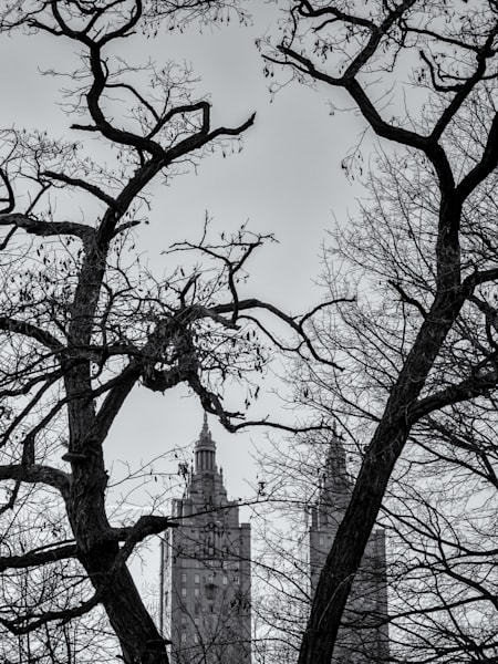 Trees and Buildings - Central Park, NYC