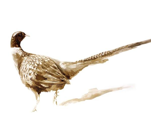 SK Pheasant - Print